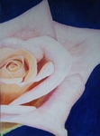 image of acrylic painting Rose by Carron Berkes